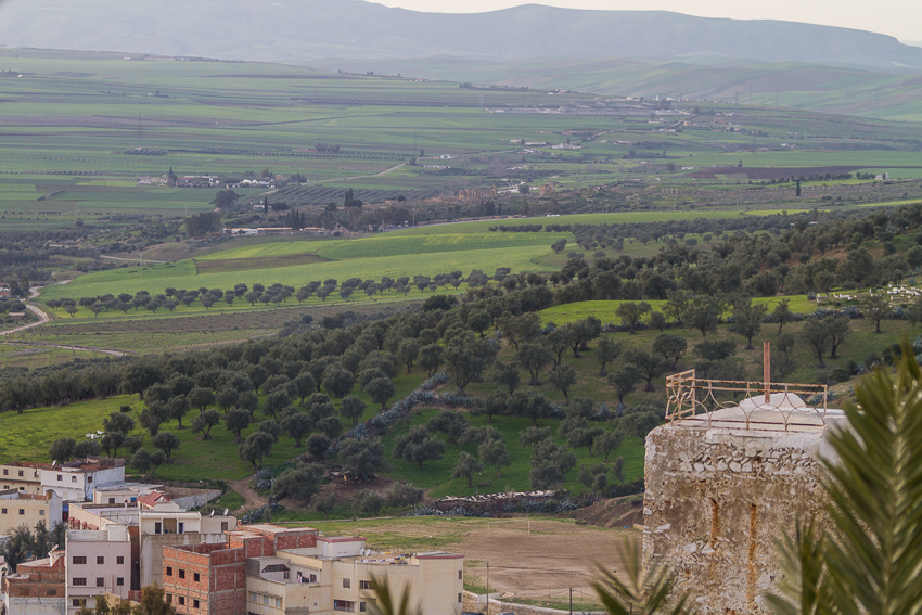 A view of Volibilis – upper centre – from the higher streets of Moulay Idriss Zerhoun.