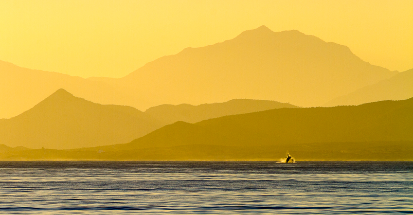 A humpback whale breaches the surface just before the sun heads over the Baja Peninsula.