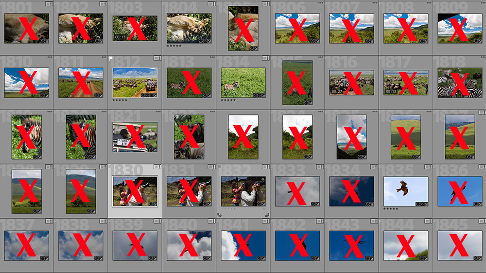 Five keeper shots out of 45 is still a high ratio, considering I took 1,800 photos in the Serengeti.