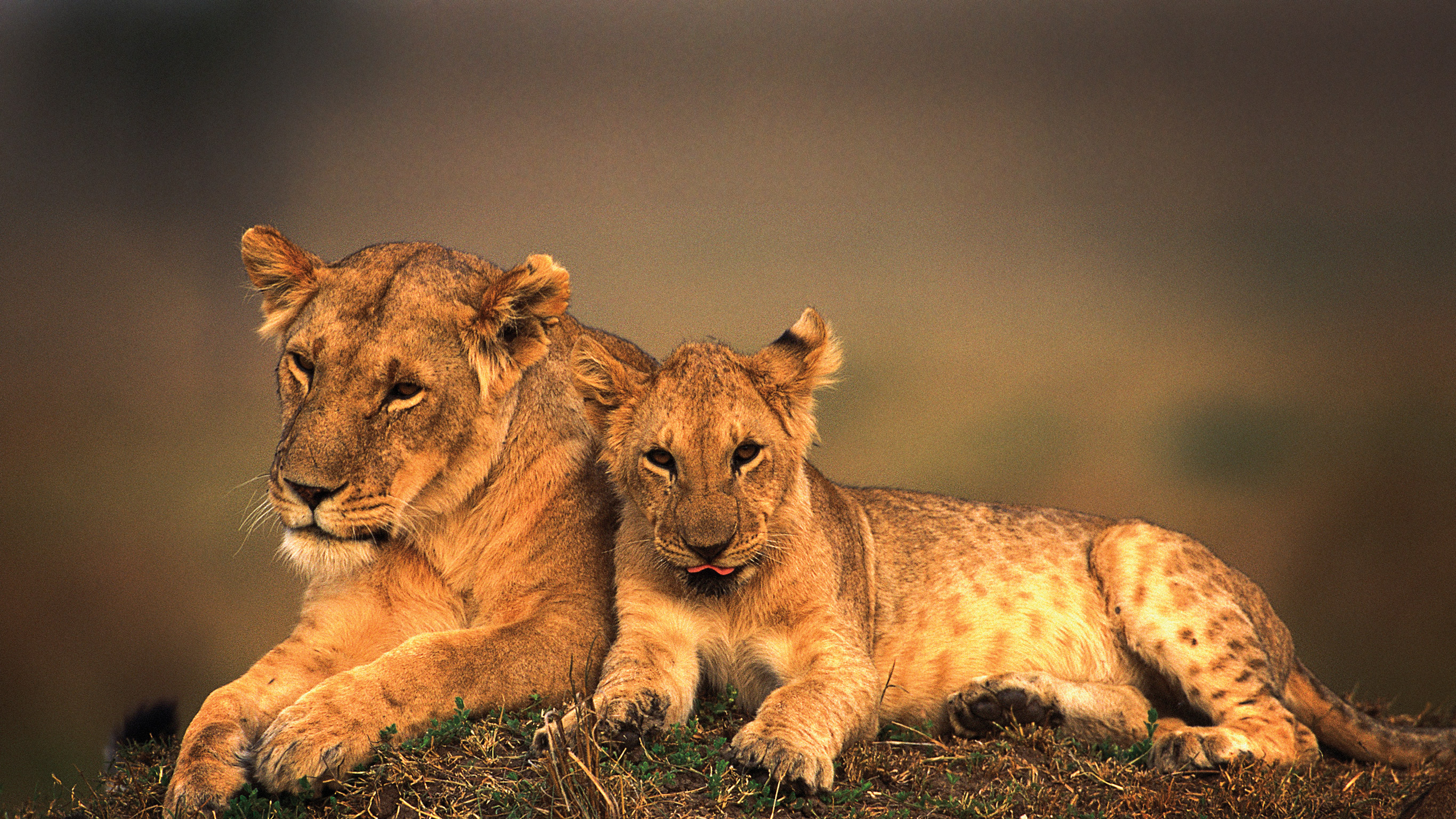 Going Beyond the Safaris: Travel Experts Open Up About Kenya