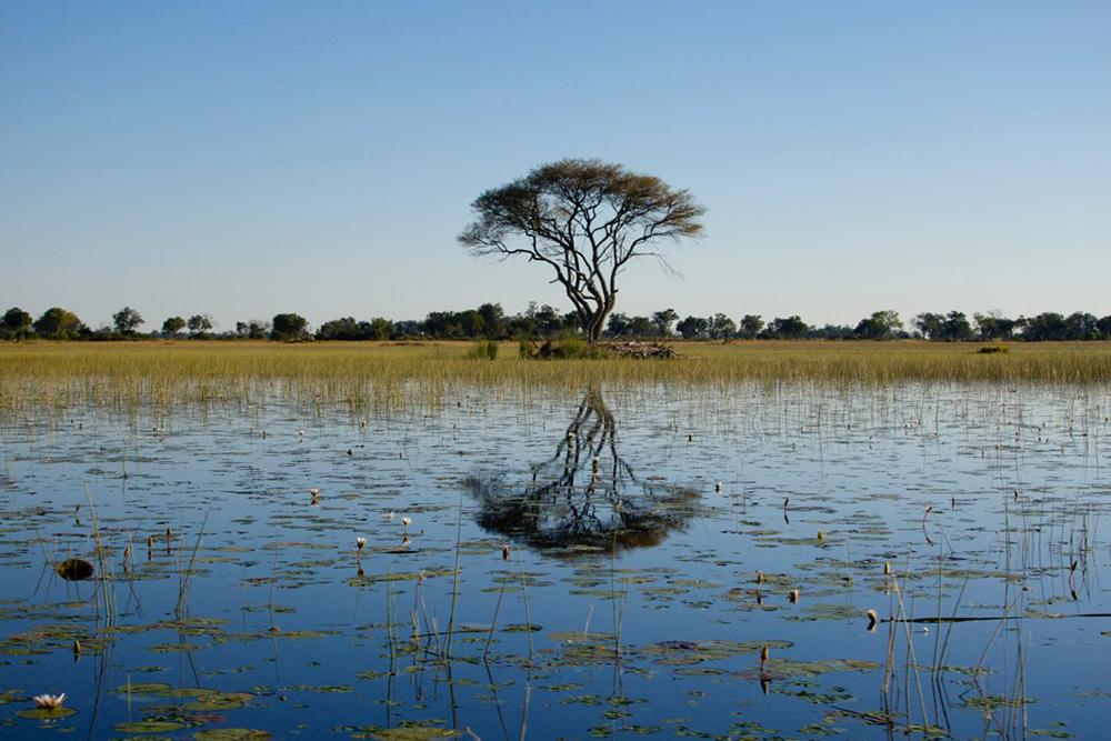 A view of the Okavango Delta. Photo courtesy of noaml.