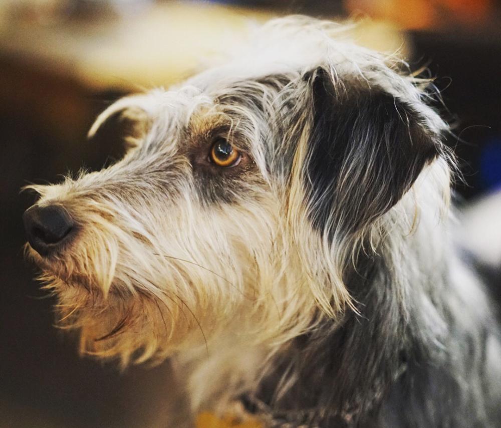 Migo the dog.