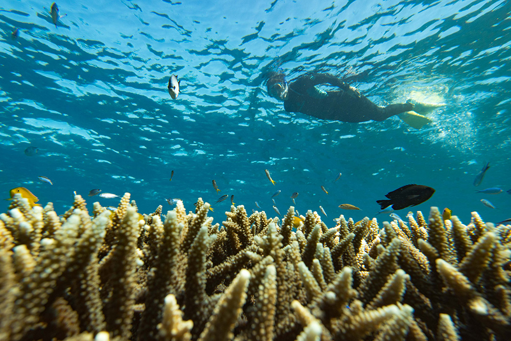 Snorkelling in the Great Barrier Reef.