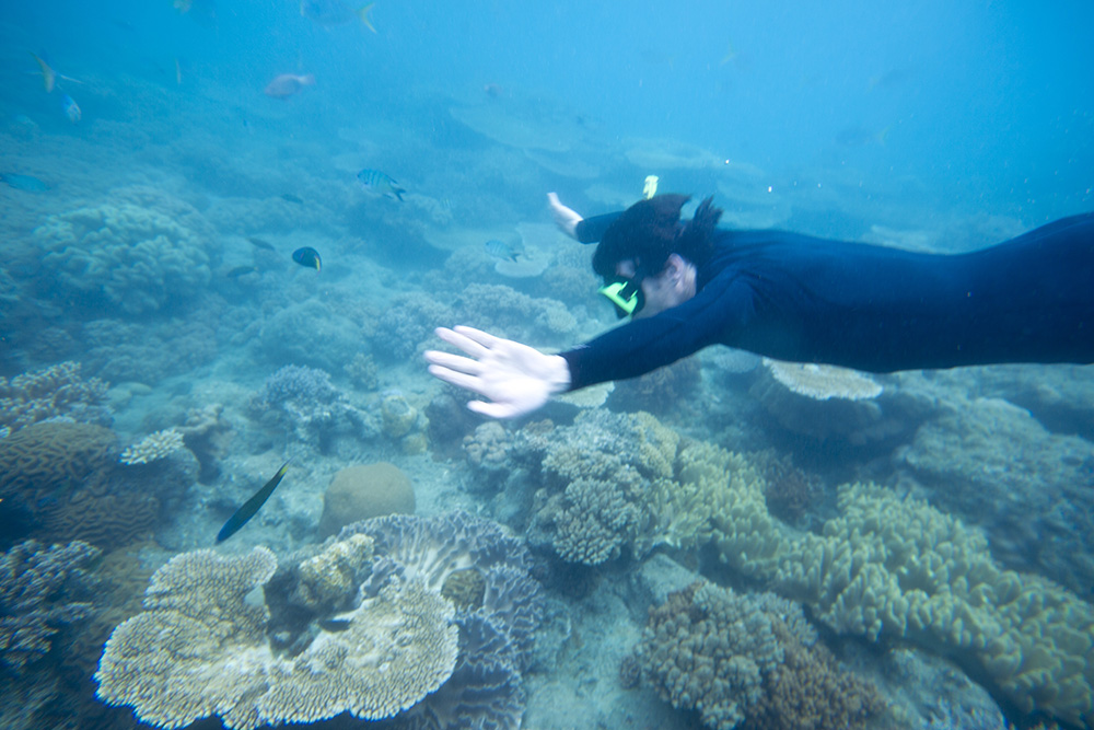 The Great Barrier Reef is one of the world's most precious ecosystems.