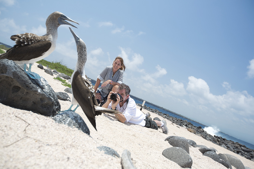 Travellers photograph a pair of blue footed boobies in the Galápagos.
