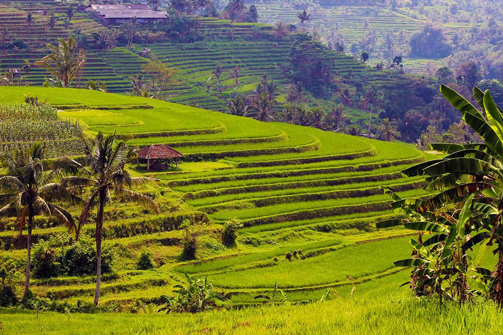 Jatiluwih Rice Terraces in Bali.