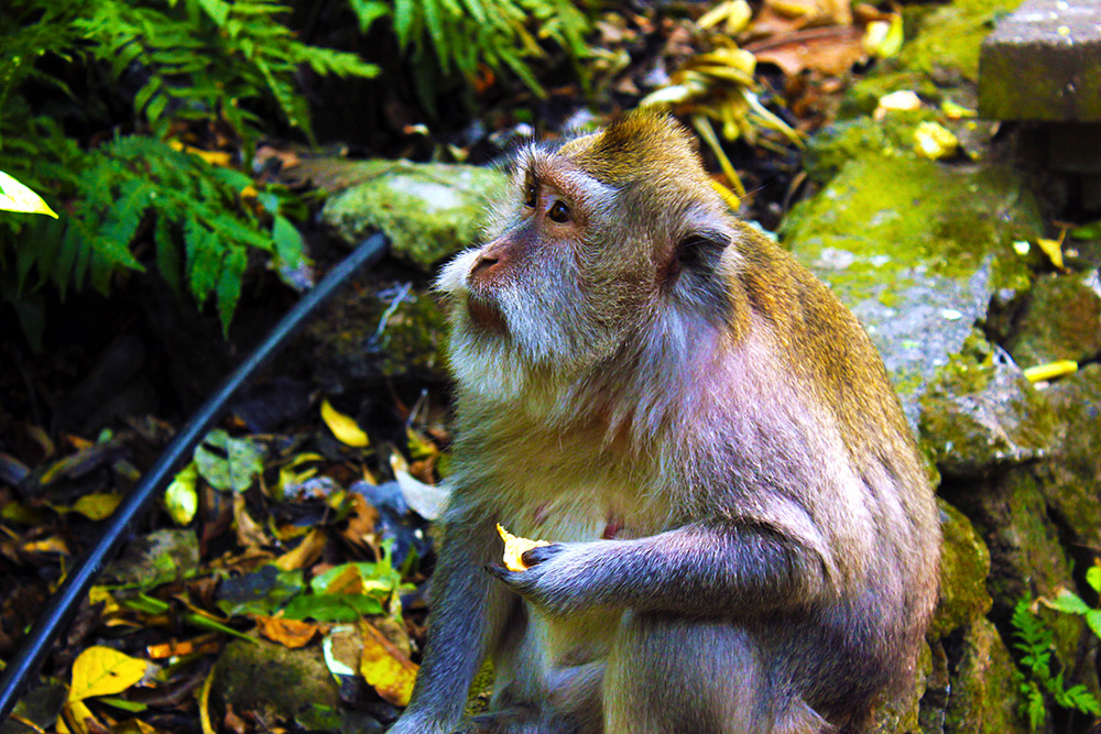 Having a snack at the Monkey Forest in Ubud.