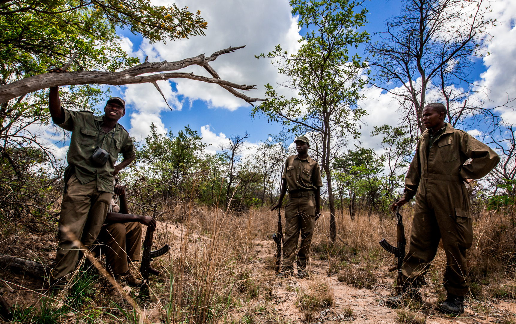 Locals are hired to protect the remaining rhinos from poaching.