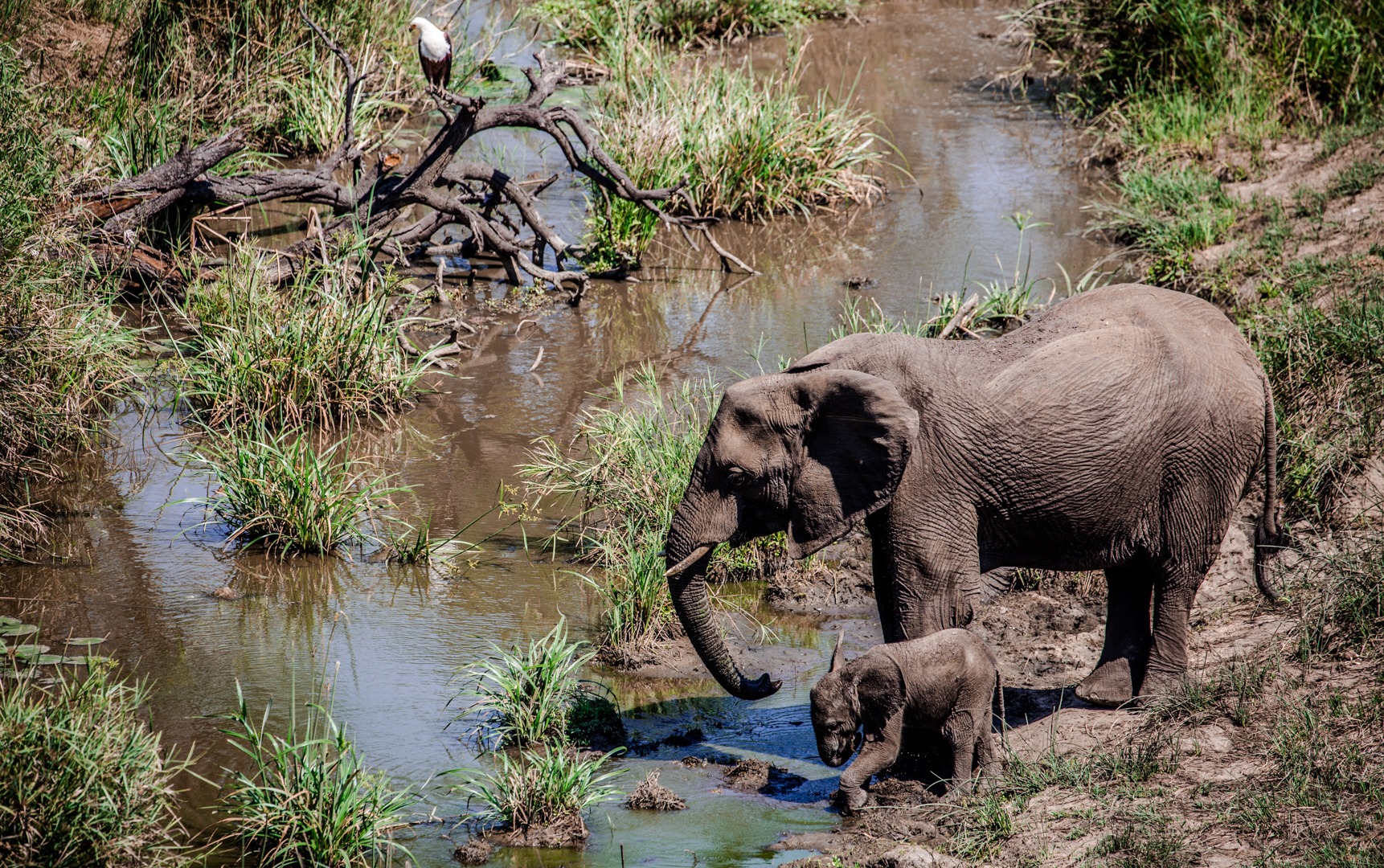 Mother and baby elephant cool off with a drink in Kruger National Park, South Africa.