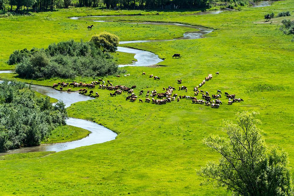 Mongolia's vast grasslands.
