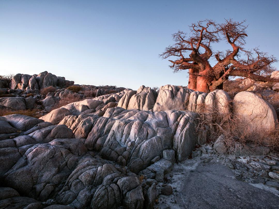 botswana zimbabwe safari in zimbabwe africa g adventures